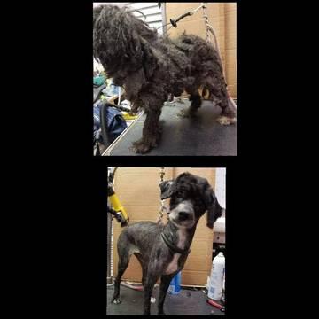 Top story 9565423bad9a55da647c 10 17 18 animal cruelty case 1