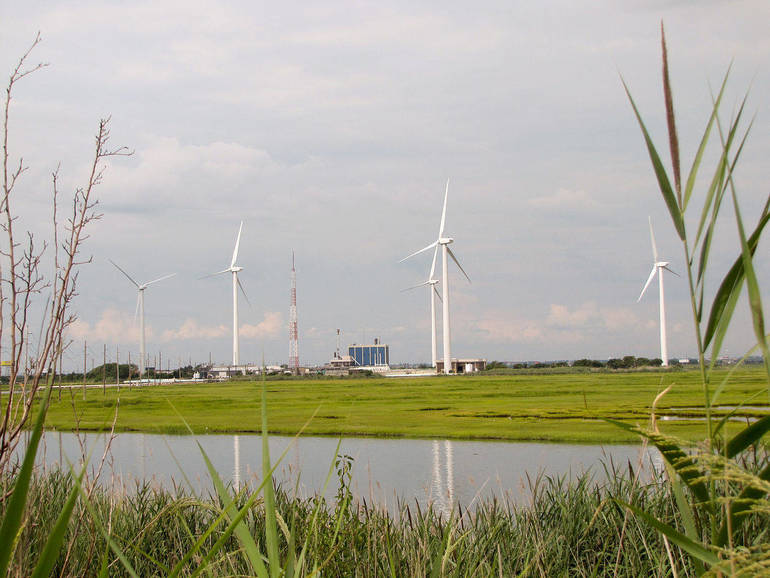 New Jersey Audubon Celebrates Board of Public Utilities' 1100 MW Solicitation of Offshore Wind