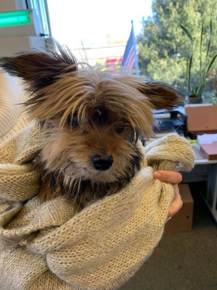 Small Dog Found in Linden