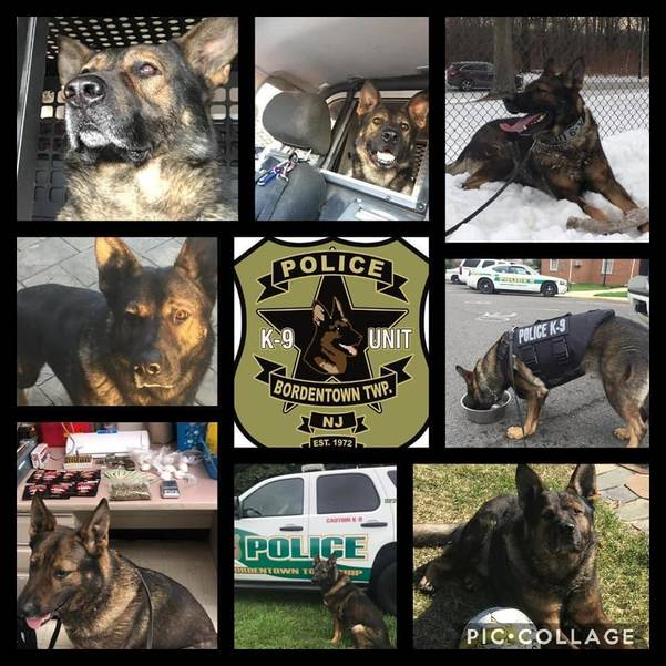 Bordentown Township Police Mourn Loss of K9 Boston