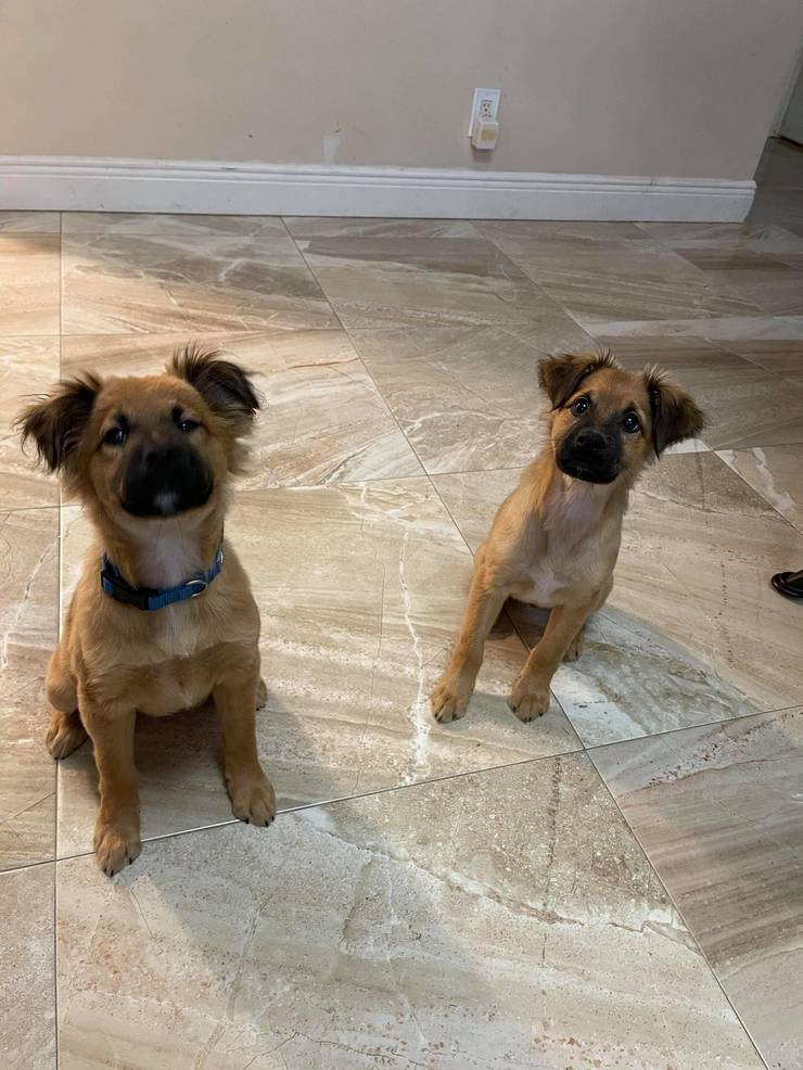 Meet Asher and Honey: Wonder Paws Rescue Pets of the Week