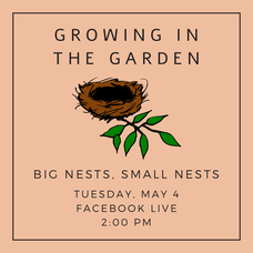 "Macculloch Hall Presents ""Growing in the Garden today at 2pm on  Facebook Live"""