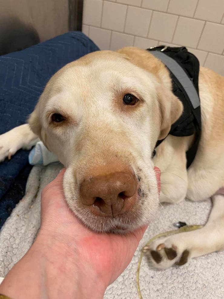Injured Dog Found in Paterson Given Hope for Better Life
