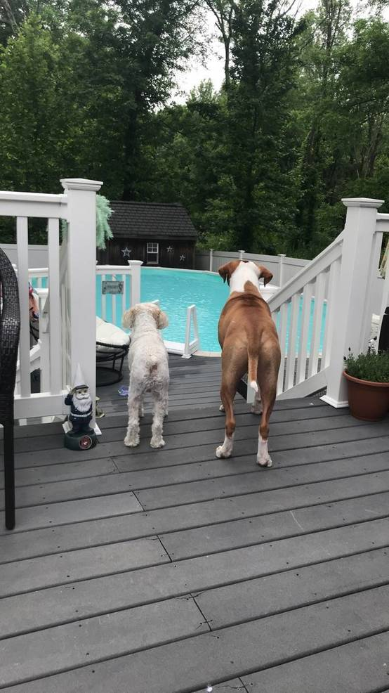 2019 dogs-  Tuddie (l) and Butter .jpg