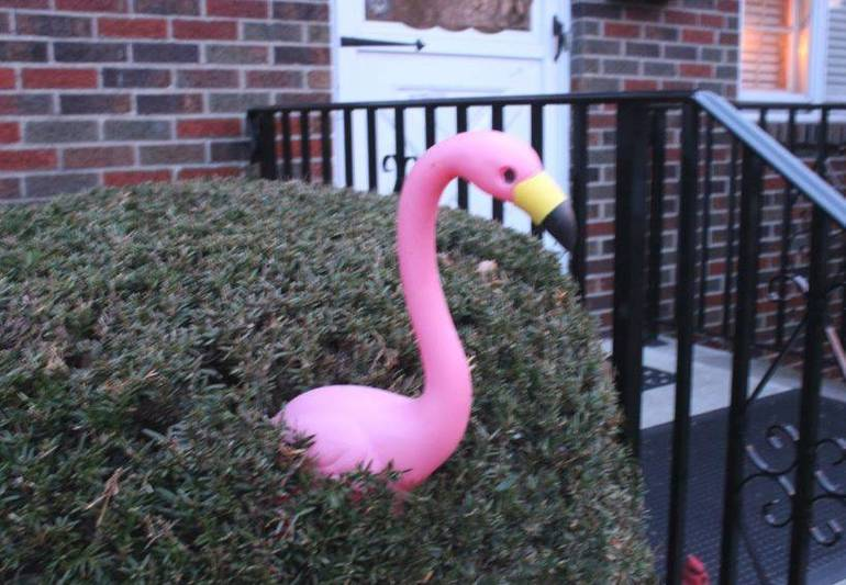 2019 Flamingos April 14 l.JPG