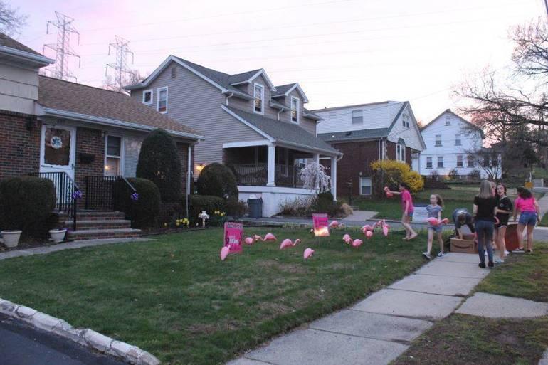 2019 Flamingos April 14 d.JPG