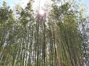 'Running Bamboo' Disputes in Lake Como to Be Settled Between Neighbors