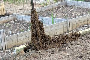 Roxbury honeybees, Roxbury, NJ news, Roxbury Community Garden