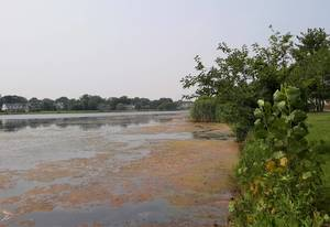 Monmouth University to Monitor Algae Growth in Lake Como for Another Two Years