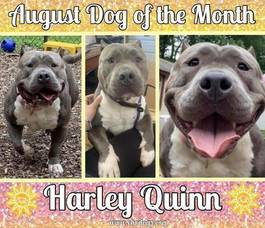 Dog of the Month - Miss Harley Quinn