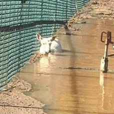 Somerset Resident Helps  Save the Johnson Park Animals