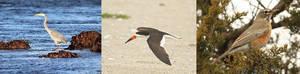Carousel image 805880d291e21e1c9f68 3 birds