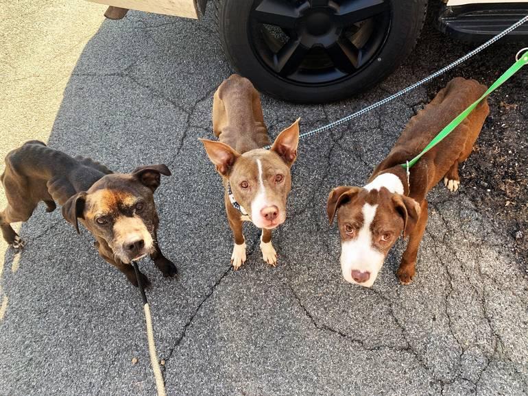 3 doggies.jpg