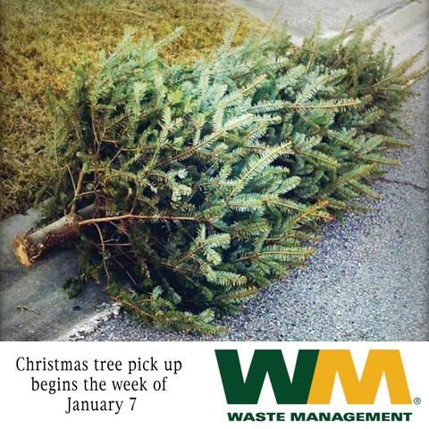 Christmas Tree Pick Up.Waste Management Christmas Tree Pickup And Bulk Pick Up