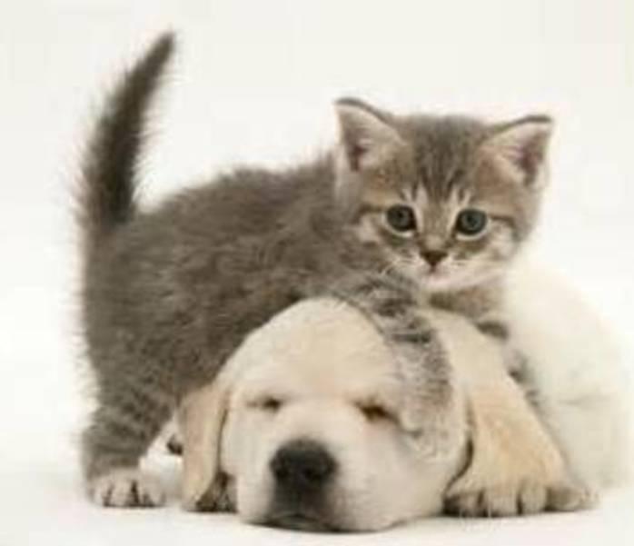 Somerset Regional Animal Shelter Holding Kitten Shower