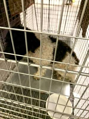 Found in Warren: Do You Know This Dog?