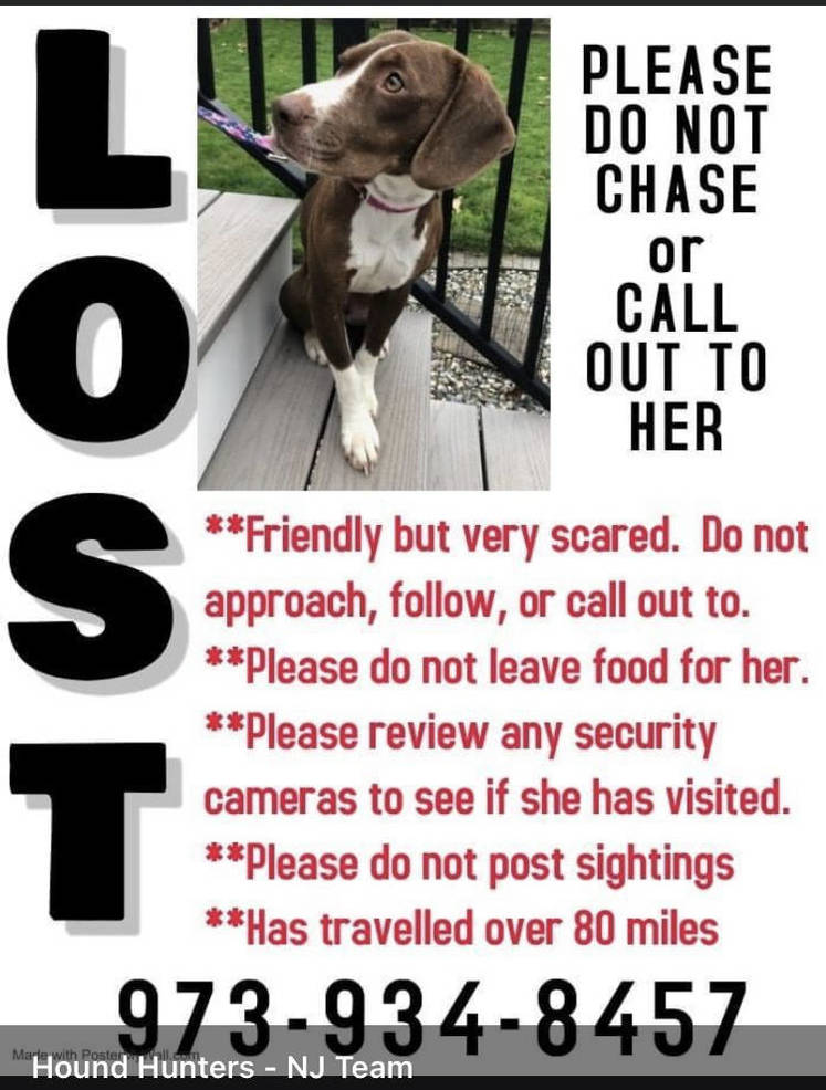 Lost Dog From Randolph Tapinto