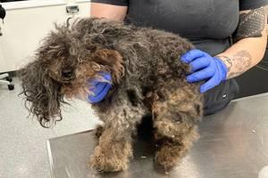 Putnam SPCA Seek Help in Abused Dog Case