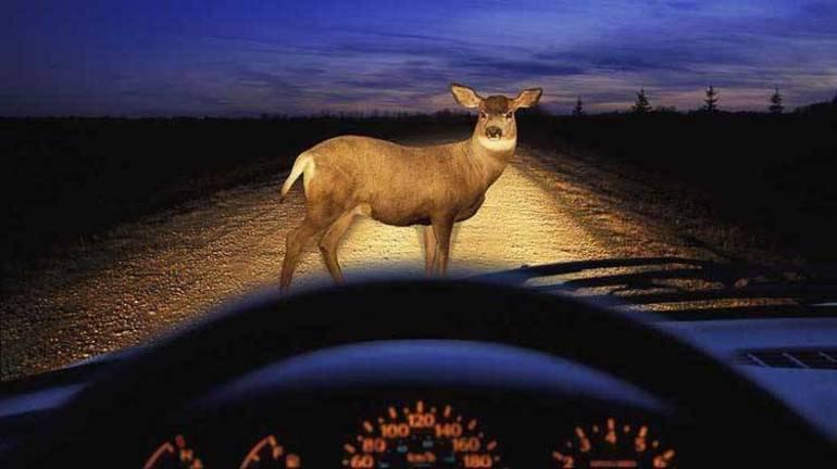92-hit-a-deer-wide.jpg