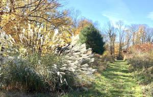 Old Field Preserve Lewisboro