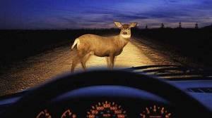 Carousel image 527dbe79849eff8d1f12 92 hit a deer wide