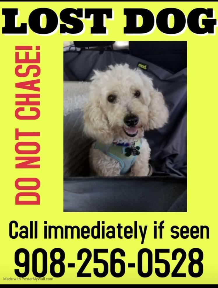Missing: Have You Seen This Dog?93D84EDD-DA33-40DB-9597-0A23560E3223.jpeg