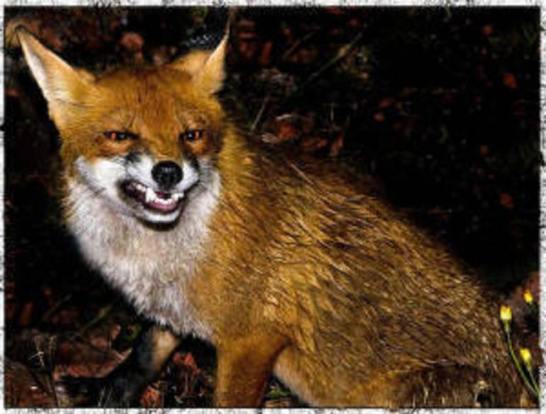 Rabid Animals Found In East Brunswick North