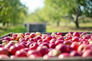 Carousel image 86744834ee8f368b509c apples 1004886 1920