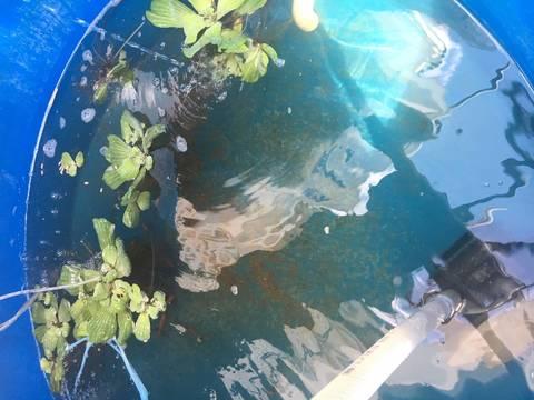 Top story a6efacb1a07b1f985dda aquaponic system 2