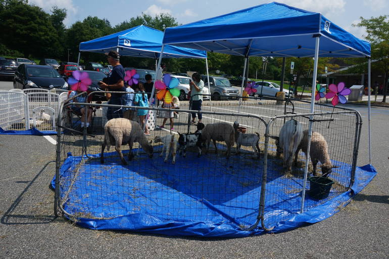 a The petting zoo at the library's summer reading program finale ©2018 TAPinto Montville.JPG