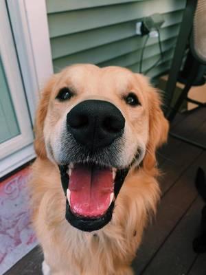 Boulevard Veterinary Clinic Pet of the Week: Brody