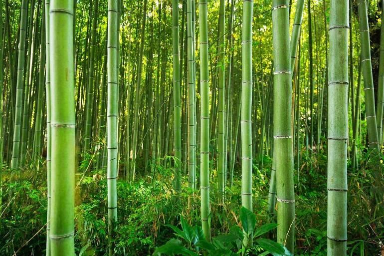 Best crop 127b0455c8f4c1505fa3 bamboo shutterstock 668560117