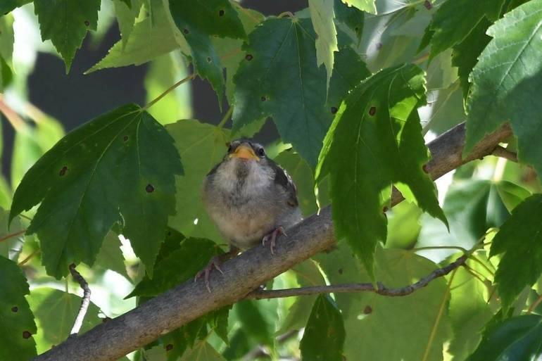 Baby sparrow.jpeg