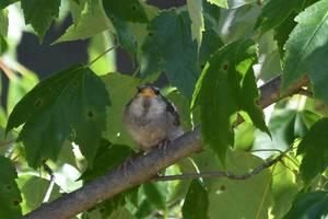 Carousel image 78aaed6b3ba1103563d5 baby sparrow