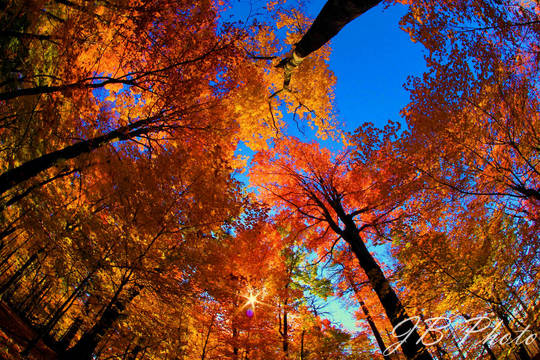 Top story 72b70f40deb2434a3c6b batley jessica naturalenvironment washingtonvalleypark