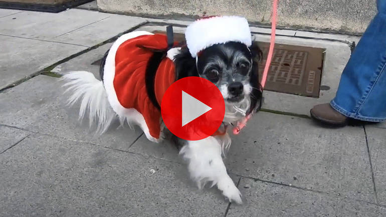 Santa Dog at Bloomfield Center Alliance Holiday Hunt