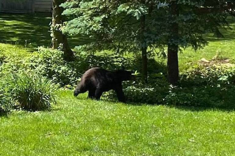 Bear_CranfordNJ_365Pic.jpg