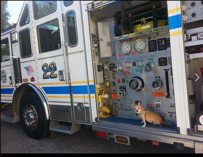 Belmont Hills Rescue 22.PNG