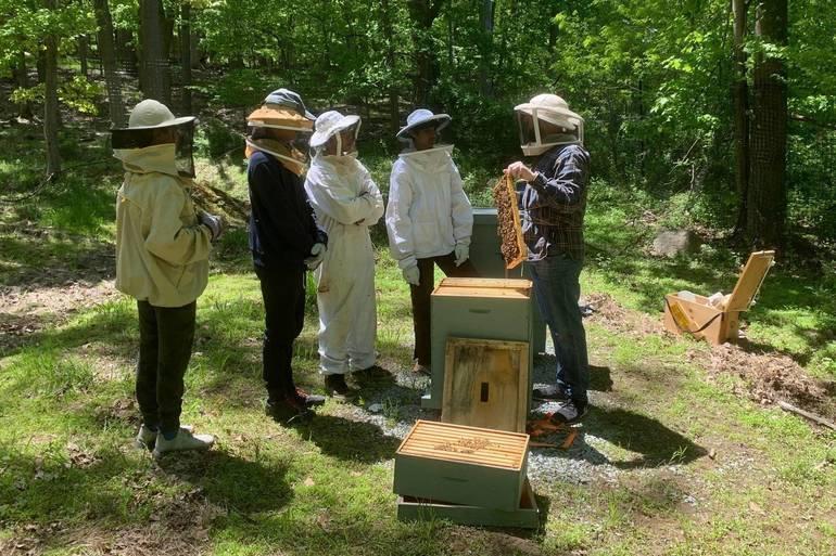 Bee Project 2019 2.jpg