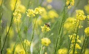 Bee Engaged! Celebrating World Bee Day