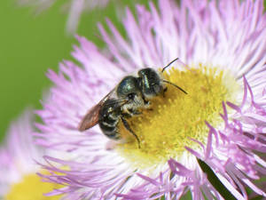 Native Plants and their Pollinators (for Adults & Teens 13+)