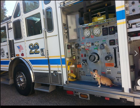 Top_story_947f3aa7a1a4cc5ee4db_belmont_hills_rescue_22