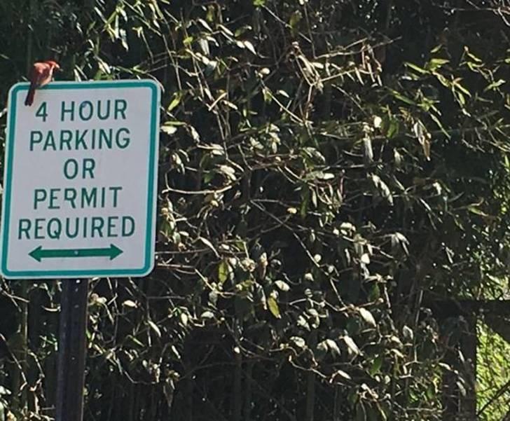 Signs of spring at Bernardsville Public Library