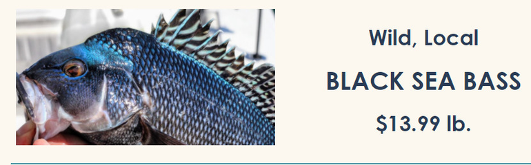 Black Sea bass.png