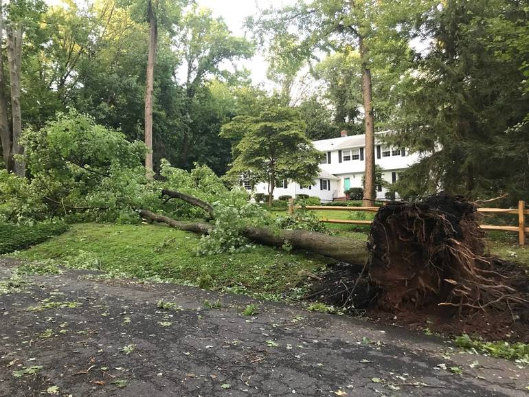 Downed tree on Black Birch in Scotch Plains.
