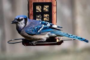 New Bird Disease Spreading; Residents Urged to Remove Feeders Temporarily