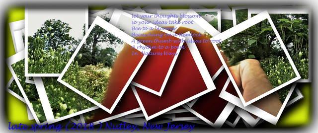 Top story 66c8b373386a46769adf blursnapsto a poem
