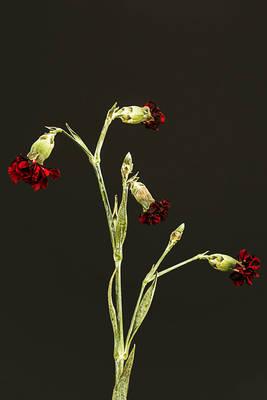 Carousel image afe2e21e540e083a1d9f botanicalbeauty