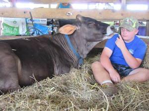 Carousel image c6d8aa8fcf03046a5fc1 boy phone cow fair  2017