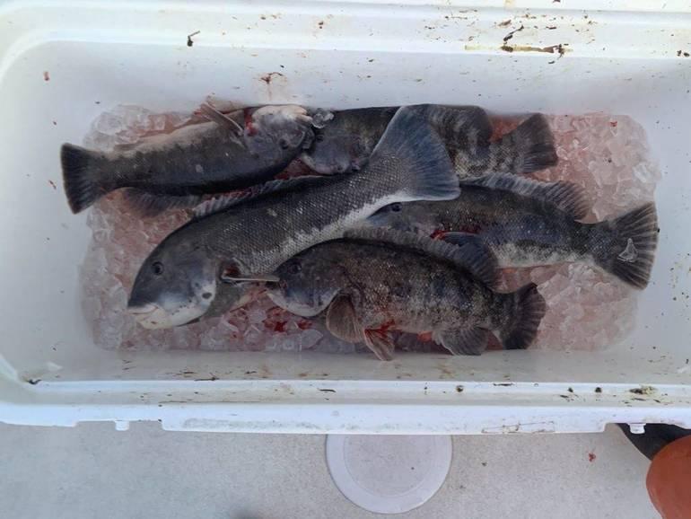 brett blackfish.jpeg